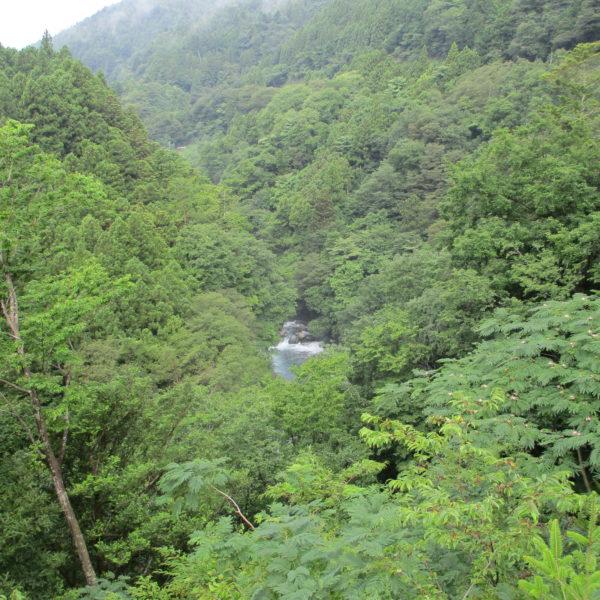 道志川付近の山の景色